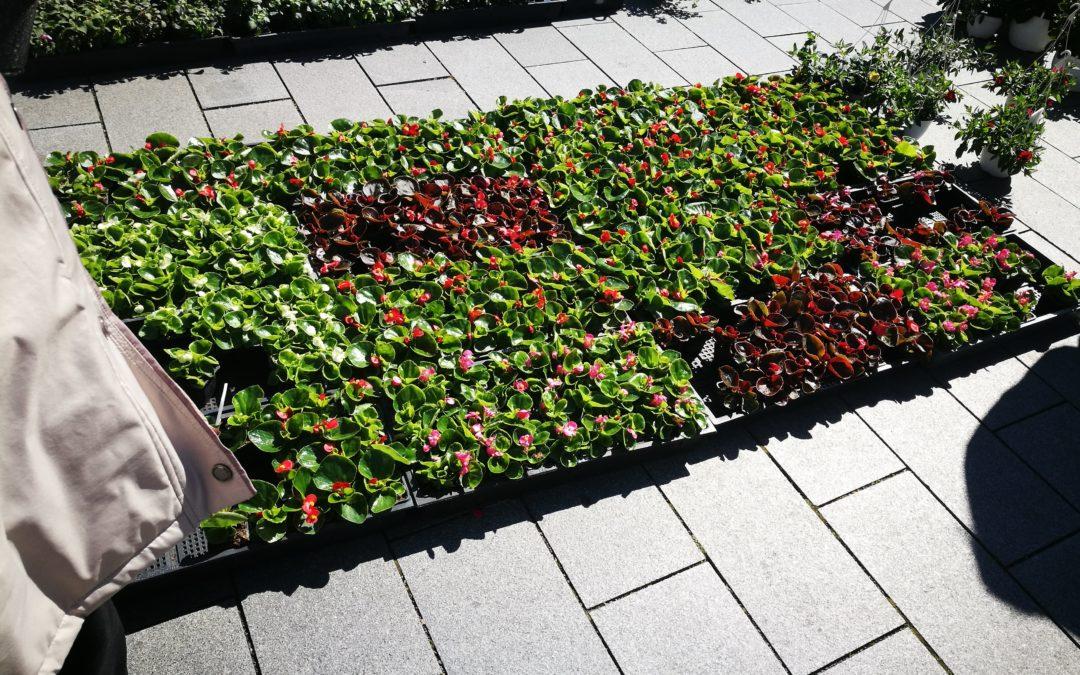 Ismét különleges növényekkel telik meg a Kossuth tér