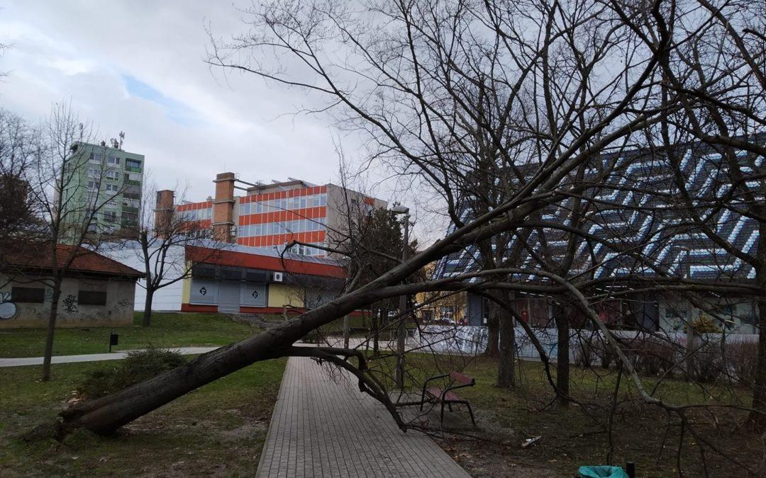 Fákat döntött ki a vihar Pécsett