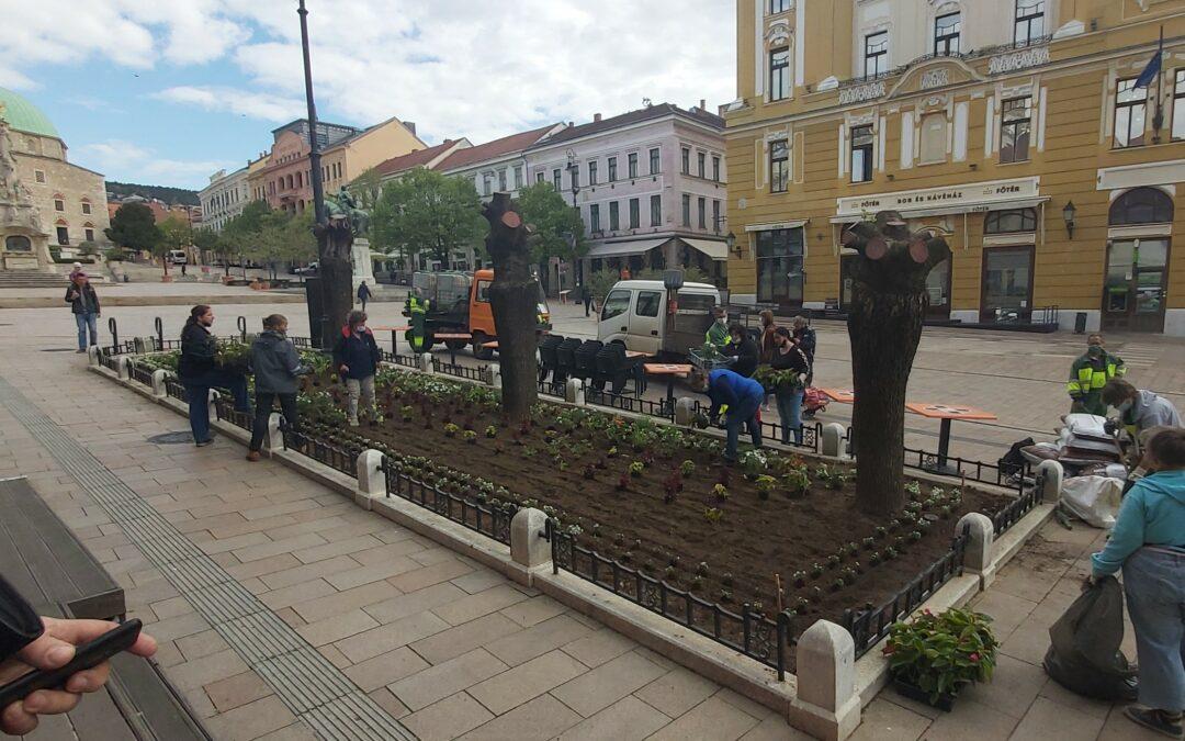 Megújulnak a Széchenyi téri növénykazetták