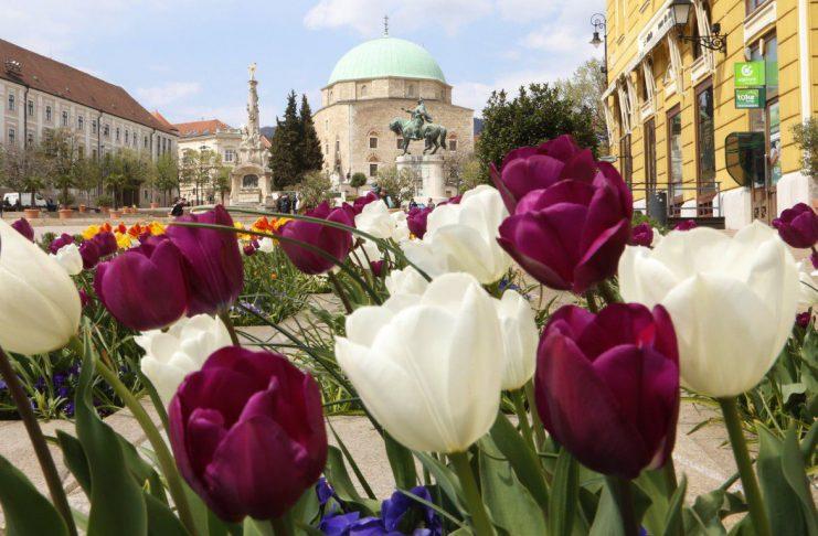 Pécs egyre zöldebbé válik