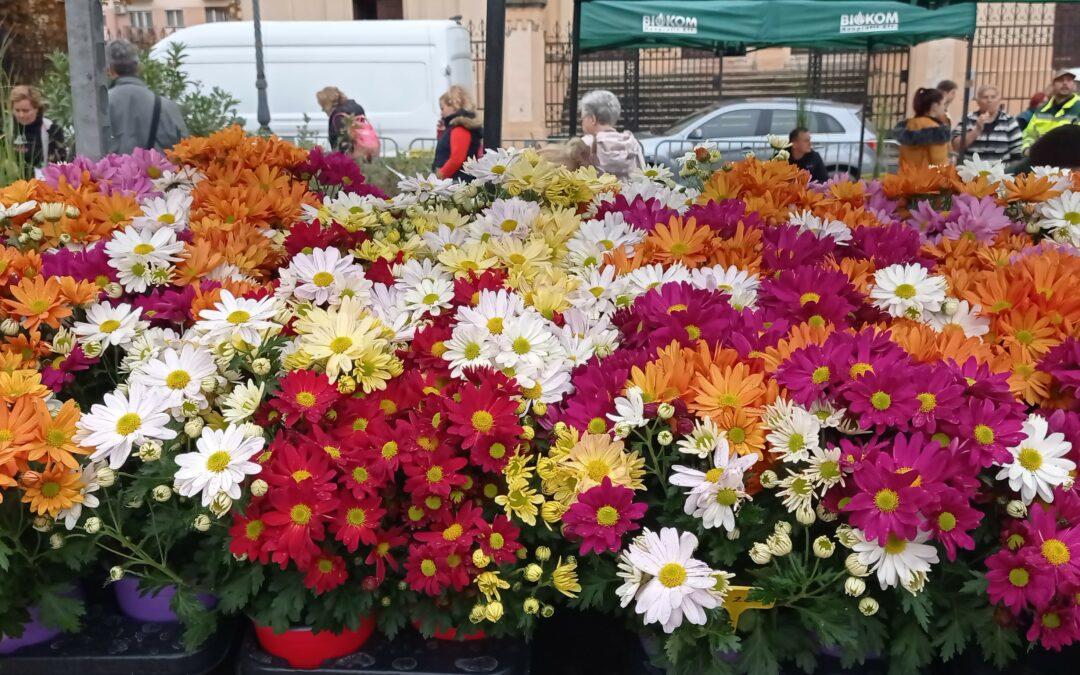 A borús idő ellenére is sikeres volt a virágvásár